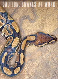 Image result for picture of a den of vipers