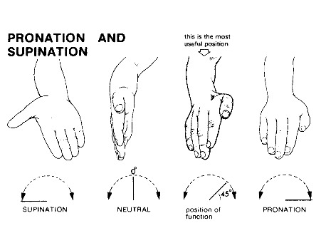 Supination, Pronation of the Foot
