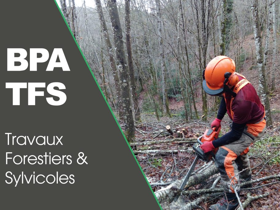 CFPPA formation adulte BPA Travaux Forestiers et sylvicoles
