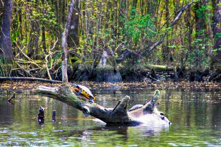 downtown Wilmington nature cruise