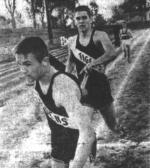 Starcevich 1964