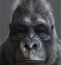 titiber13 gorilla by titi 02 w 1 0abbb8b7 j30t [ 1066 x 1600 Pixel ]