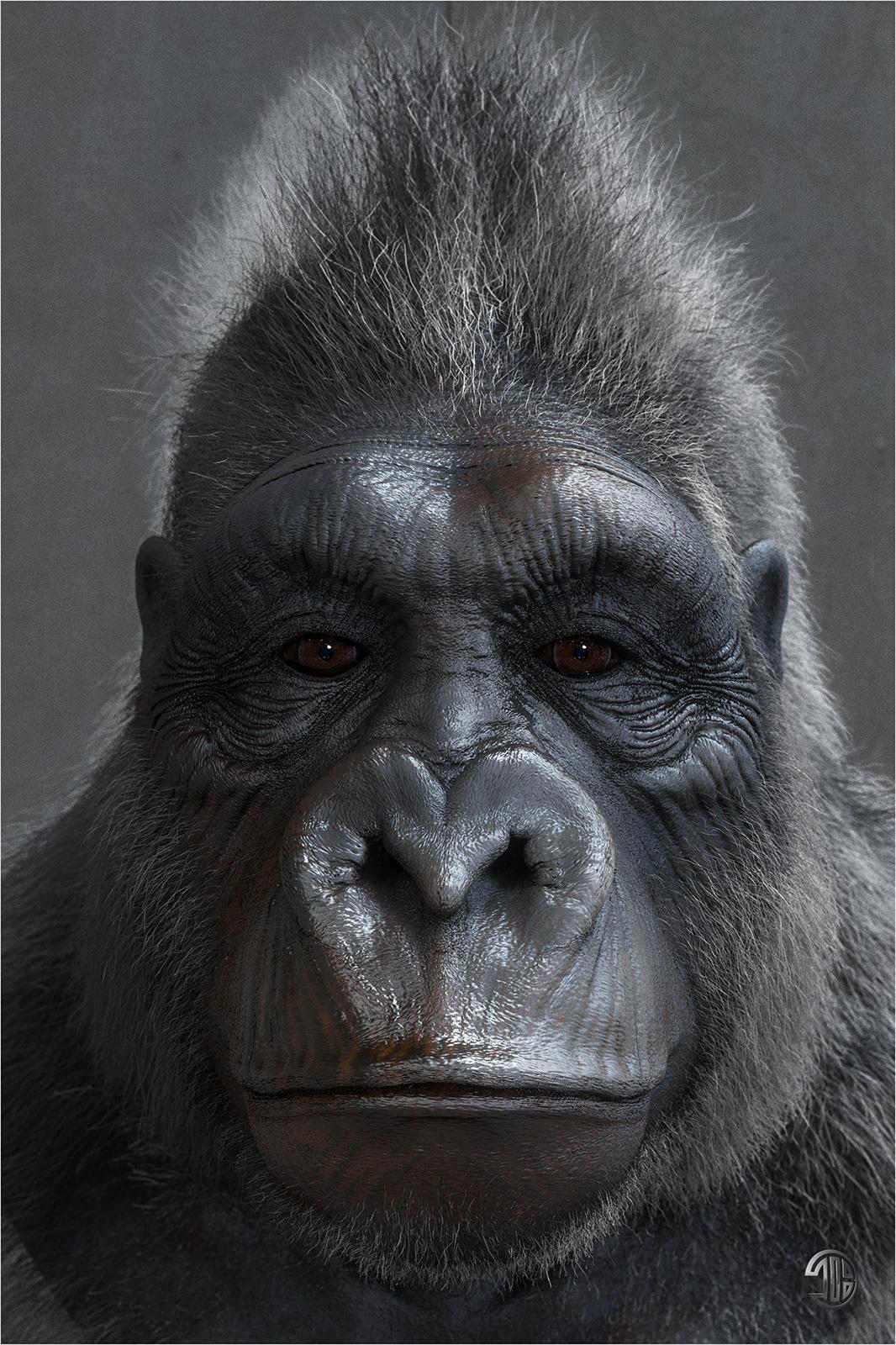 hight resolution of titiber13 gorilla by titi 02 w 1 0abbb8b7 j30t