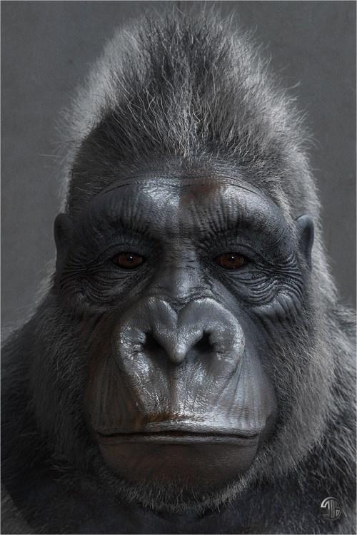 small resolution of titiber13 gorilla by titi 02 w 1 0abbb8b7 j30t