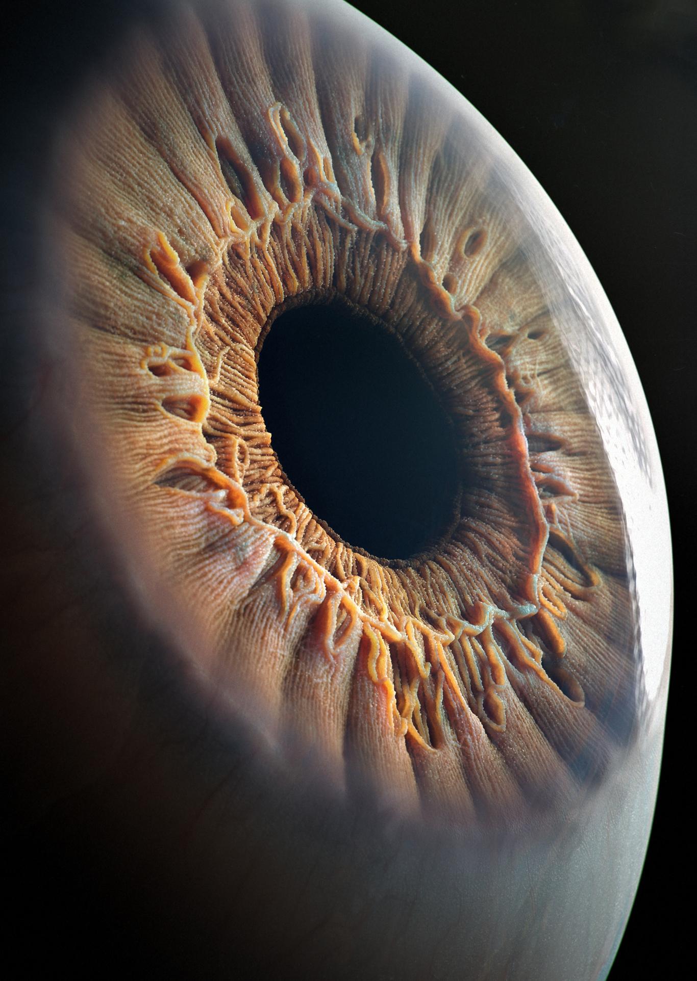 Realistic Eye by filimonov   Realistic   3D   CGSociety