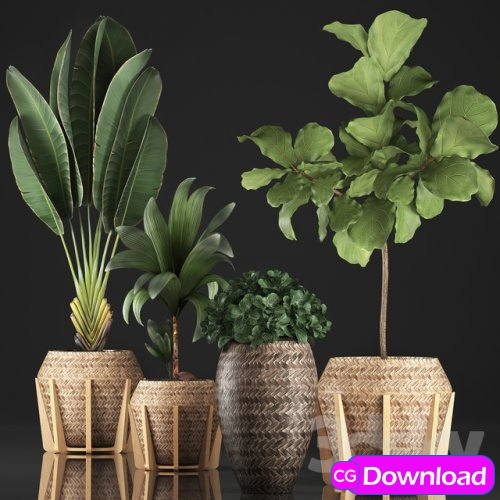 Download Plant collection 348 3d model Free