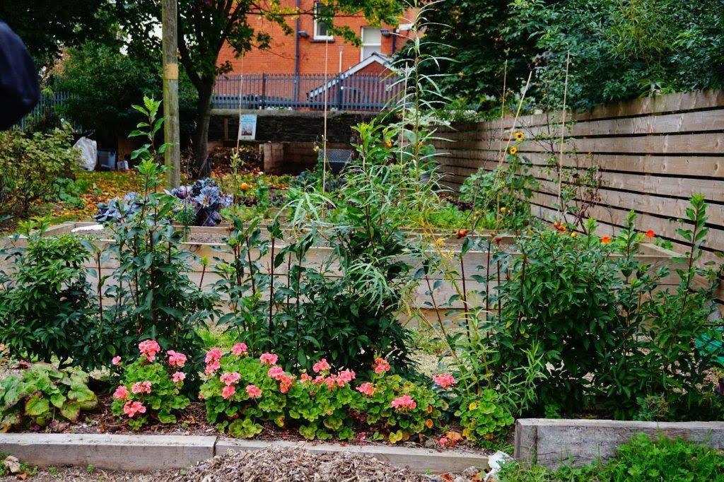 In Focus: The Muck and Magic Community Garden