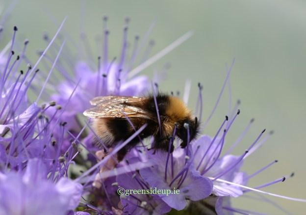 5 ways community gardens can help pollinators now