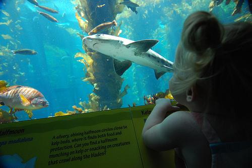 A at Monterey Aquarium