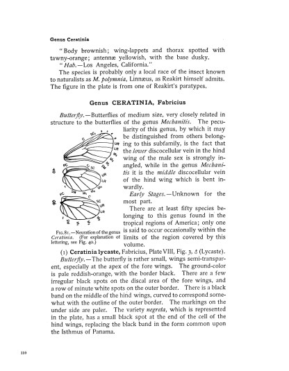The Complete Butterfly Book: Enlarged Illustrated Special Edition image 7