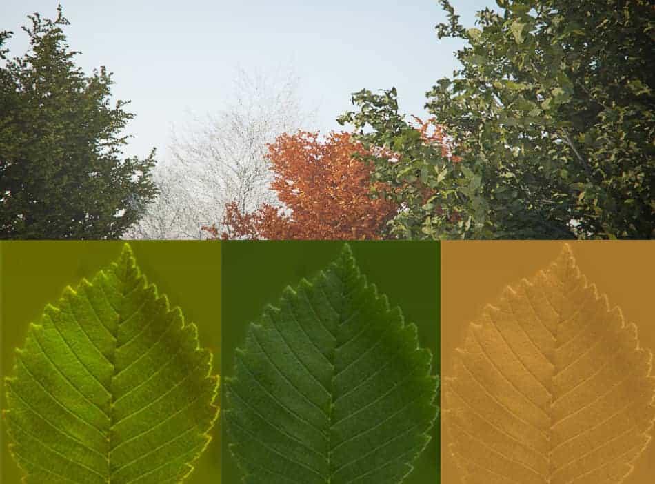 how to fix a sofa spring murphy bed toronto tree model & seasonal leaves | xoio