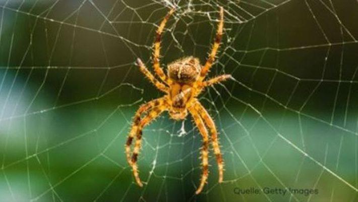 Spinnen  Galileotv  das OnlineWissensmagazin