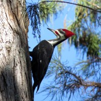 Getting to know Woodpeckers