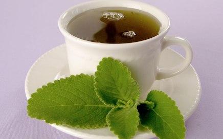 Receitas - Chá de Boldo