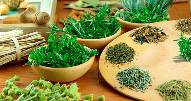 Você sabe a diferença entre ervas frescas e secas? Saiba como utilizá-las