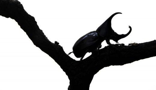 【昆虫飼育】ついにわが家にカブトムシがやって来ましたが…