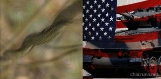 ayahuasca veterans