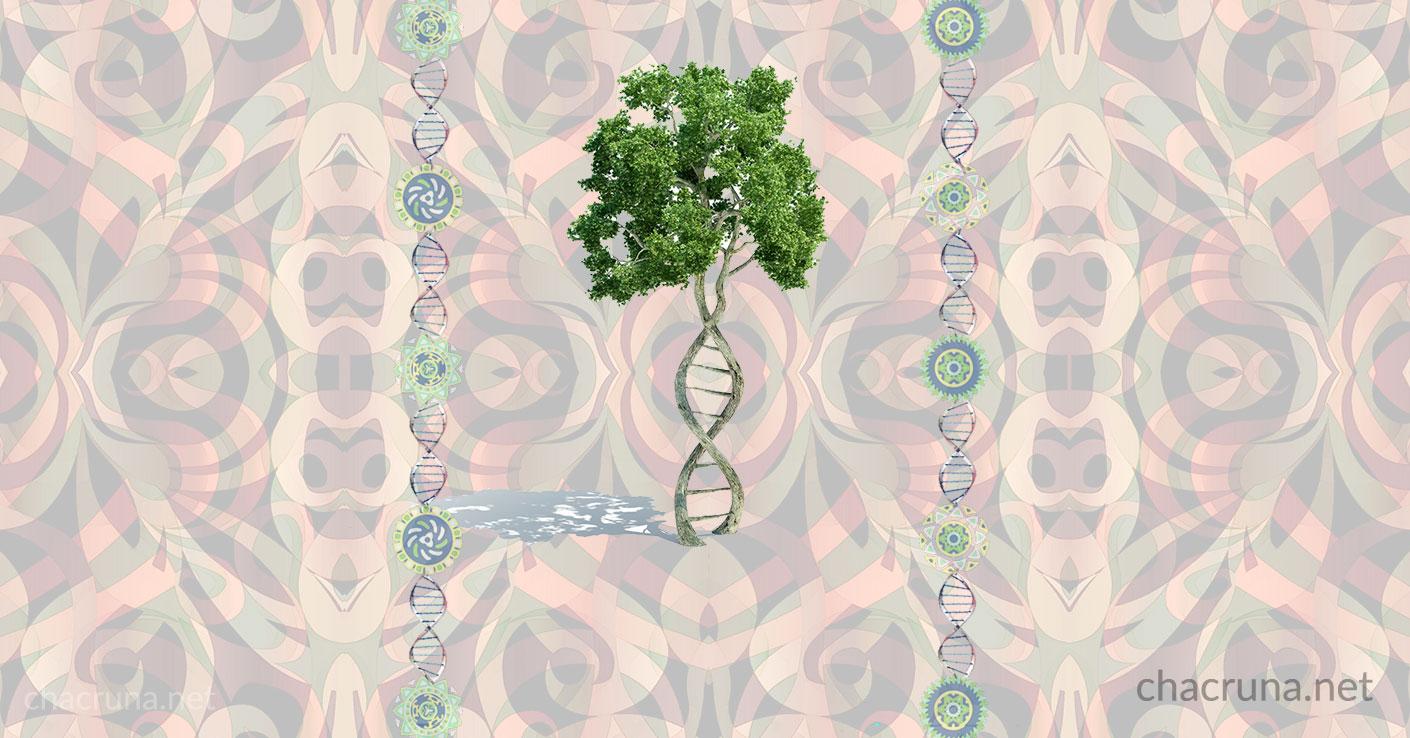 A Story of Visionary Ayahuasca Healing, DNA and Epigenetics   Chacruna