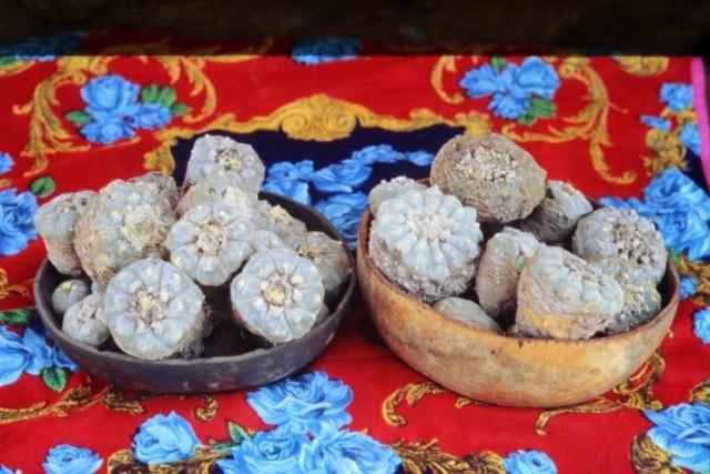 Peyote from Wirikuta in Huichol votive bowls.