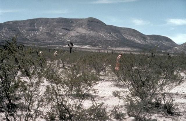 Wirikuta Huichols hunting peyote.
