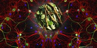 Ayahuasca brain cells