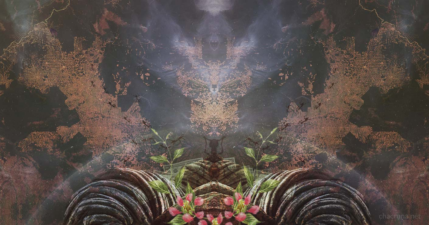 Is Ayahuasca Really Disappearing? | Chacruna