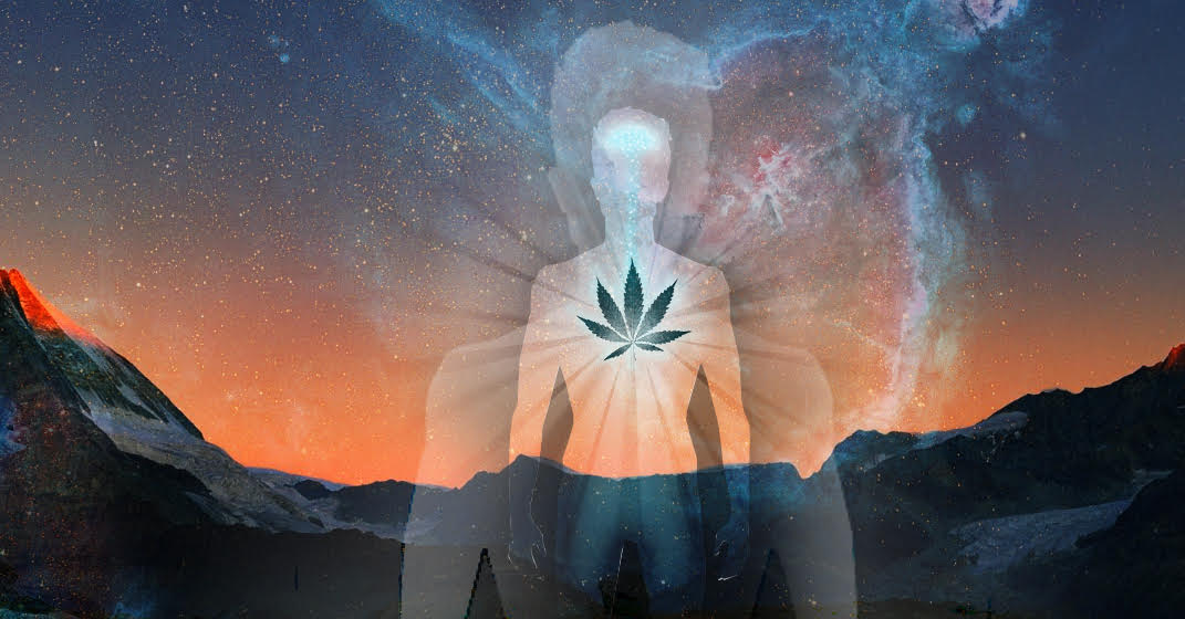 The Science Of Trauma And Its Effects >> Using Cannabis To Treat The Effects Of Trauma Chacruna