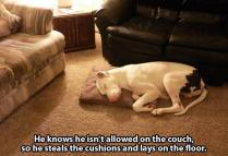 animal-thieves-caught-red-handed-20-photos-4