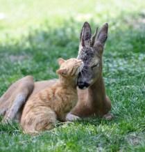 everyone-needs-a-snuggle-buddy-11