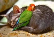 everyone-needs-a-snuggle-buddy-17