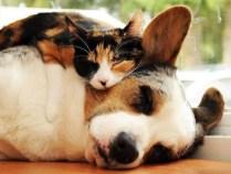 everyone-needs-a-snuggle-buddy-2