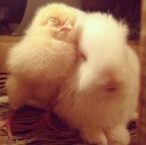 everyone-needs-a-snuggle-buddy-7
