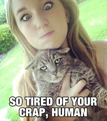 funny-cat-pictures-tired-of-your-shit-human