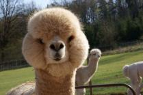 animals-we-love-funny-0