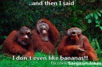 animals-we-love-funny-27