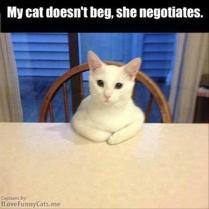a-funny-animals-1