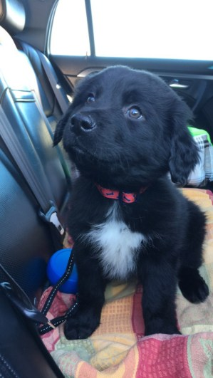 best-damn-photos-adorable-puppy
