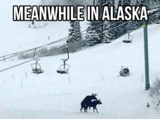 best-damn-photos-alaskan-moose