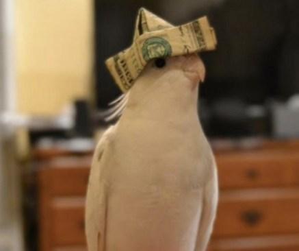 best-damn-photos-bird-dollar-hat