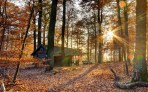 world_architecture_buildings_houses_rustic_decay_ruins_nature_landscapes_trees_forest_fall_autumn_seasons_leaves_color_sunlight_sunbeam_sun_sunrise_sunset_1920x1200