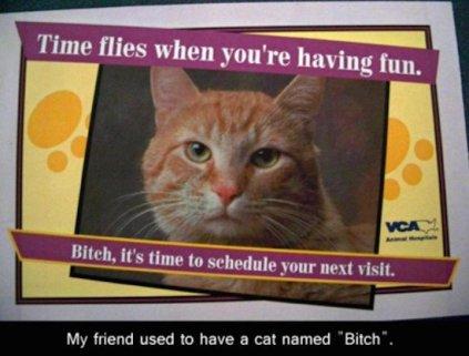 best-damn-photos-cat-named-btch