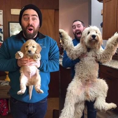 best-damn-photos-puppy-grownup