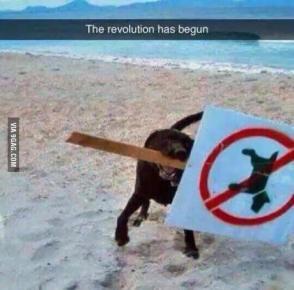 must-see-imagery-revolution-begun