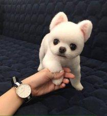 best-damn-photos-fake-puppy-stuffed