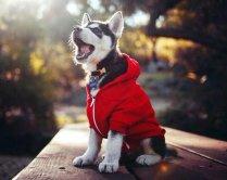 best-damn-photos-puppy-hoodie-howling
