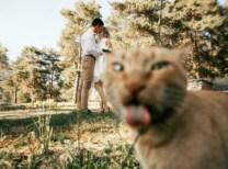 best-damn-photos-cat-photo-bomb