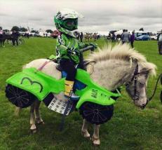 best-damn-photos-horse-race-car