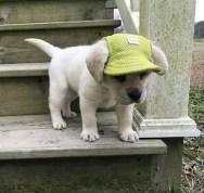 best-damn-photos-littler-pupper-hat
