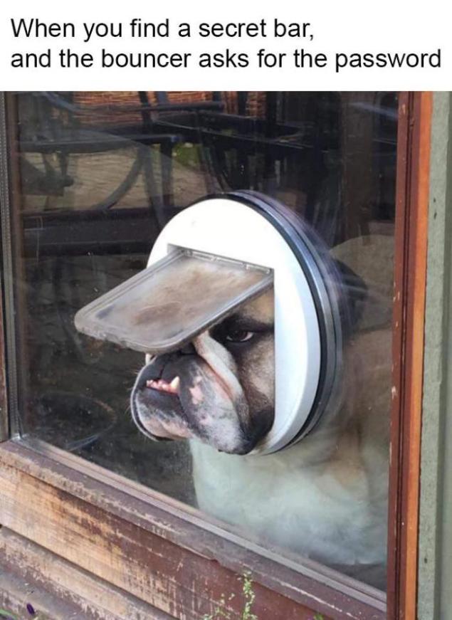 best-damn-photos-bouncer-bulldog