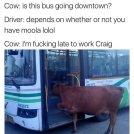best-damn-photos-cow-late